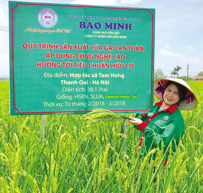Chị Bùi Thị Hạnh Hiếu, Tổng Giám đốc Công ty CP Kinh doanh chế biến Nông sản Bảo Minh tại vùng nguyên liệu, giống lúa Japonica hương cốm của công ty huyện Thanh Oai, TP Hà Nội.