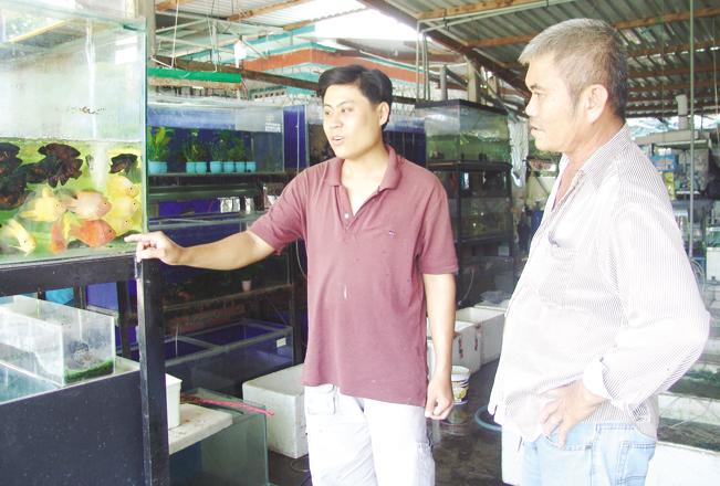 Anh Hoài Thanh đang hướng dẫn khách hàng chọn hồ chơi thủy sinh với tép kiểng.