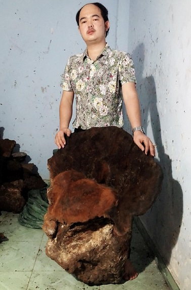 Kiểm lâm tỉnh Quảng Nam đang vào cuộc xác minh cây nấm chò do ông Oanh đang sở hữu - Ảnh CTV
