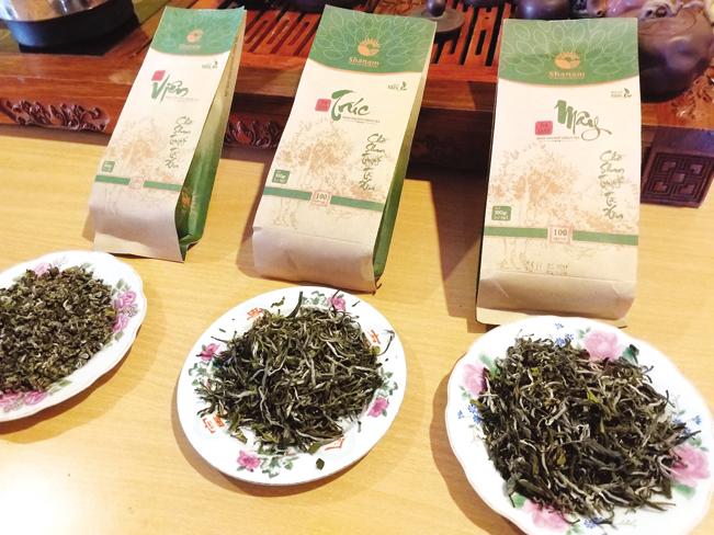 Hiện, sản phẩm chè Tà Xuà đã có mặt tại thị trường cả nước.