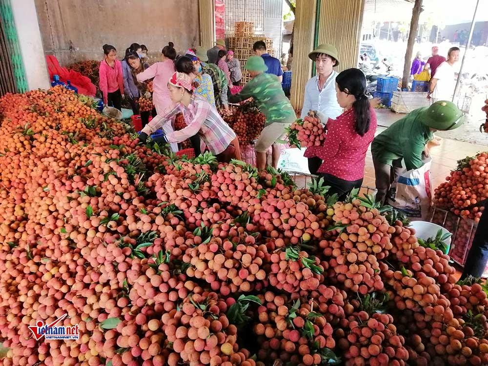 Chất lượng vải năm nay được các thương lái Trung Quốc đánh giá cao.