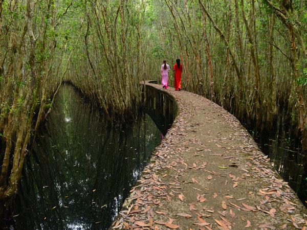 Cung đường xuyên rừng tràm là điểm đến độc đáo thu hút nhiều bạn trẻ đến