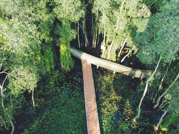 Hệ sinh thái tại làng nổi Tân Lập khá đa dạng và được bảo tồn tự nhiên (Nguồn: Internet)