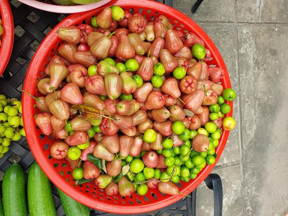 Mới đây, cô đã thu hoạch được cả trăm kg trái cây sạch bao gồm các loại như xoài, gấc, bí, mận, sung, dưa leo...
