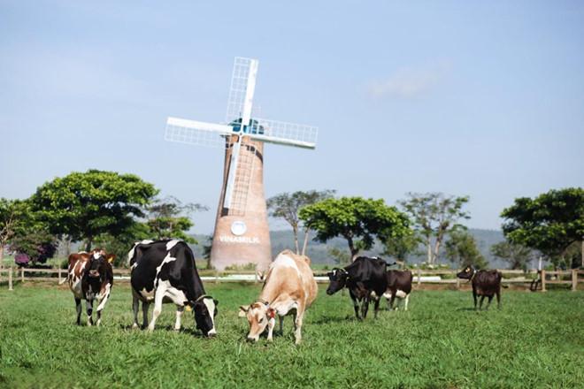 Vùng đất bazan màu mỡ tại trang trại Vinamilk organic Đà Lạt lý tưởng để gieo trồng các loại cỏ organic, yến mạch làm thức ăn cho bò.