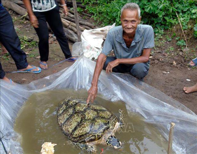 Ông Huỳnh Chánh và con rùa biển 34 kg bắt được trước sông nhà. Ảnh: Trung Hiếu-TTXVN