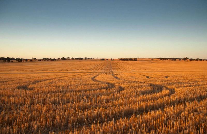 Một trang trại ở Úc.