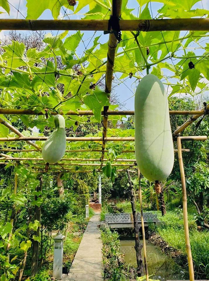 Khu vườn nông trại của Việt Trinh ở Bình Dương được nữ diễn viên tận dụng trồng rất nhiều loại rau củ quả sạch.