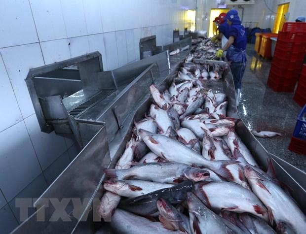 Chế biến cá tra tại Công ty TNHH Công nghiệp thuỷ sảnmiền Nam. Ảnh: TTXVN