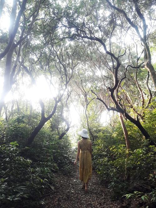 Nghe các cụ trong làng kể rằng, rừng trâm có cách nay hơn 300 trăm năm.