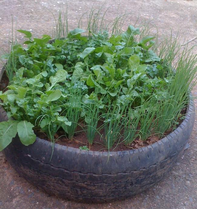 Một lốp xe được đổ đầy đất, trám xi măng chắc chắn phía dưới sẽ là khu đất nhỏ trồng rau mà hàng xóm phải ghen tị.
