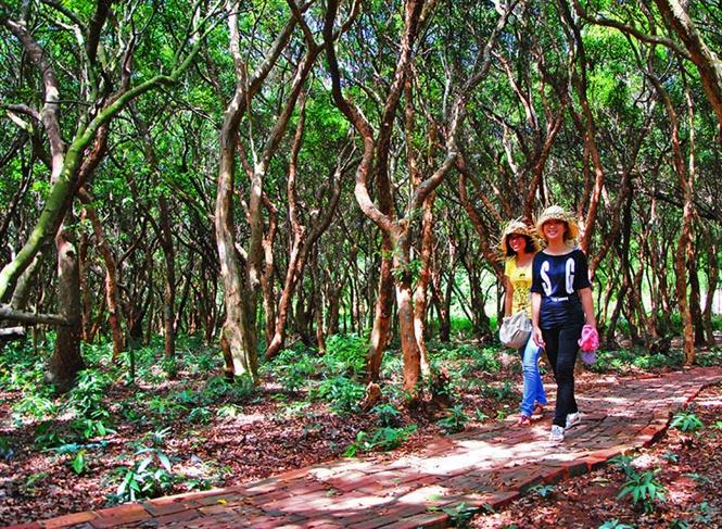 Du khách tới thăm rừng trâm cổ thụ.