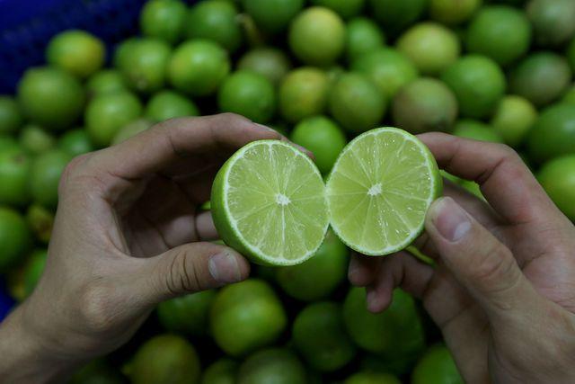 Khi trái chanh to bằng nửa nắm tay, vỏ xanh, bóng là có thể thu hoạch được. Giống chanh này ra trái quanh năm, cứ khoảng 20 ngày có thể thu hoạch 1 lần, đạt năng suất khoảng 15kg mỗi cây.
