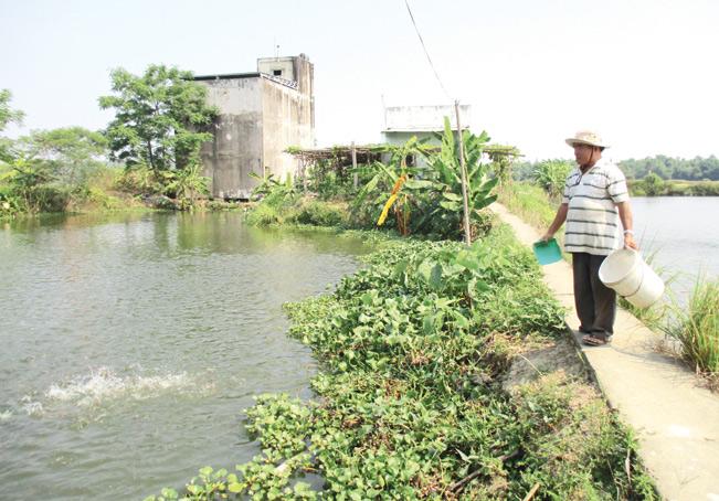 """""""Tàn nhưng không phế"""" ông Lê Văn Nuôi ở xã Điện Thọ, thị xã Điện Bàn, tỉnh Quảng Nam đã vượt lên số phận xây dựng được cơ ngơi bạc tỷ bằng mô hình nuôi cá đầy ao."""