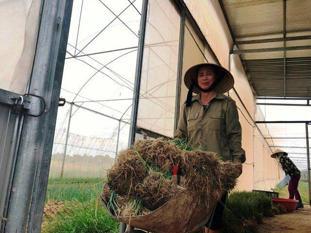 Trong trang trại của Sau, việc trồng hành trái vụ cho Ngô Hữu Sáu thu nhập cao hơn so với cây trồng khác. (ảnh H. D)