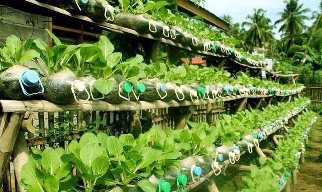 Nếu có một khoảng sân nhỏ hay ban công thì ngại gì không thử ngay thiết kế trồng rau siêu năng suất này. Rau vừa nhiều, vừa sạch, thu hàng ngày ăn không xuể.