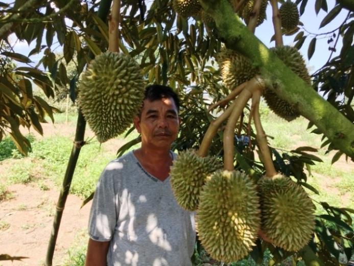Đặc sản sầu riêng của nông dân Khánh Hòa.