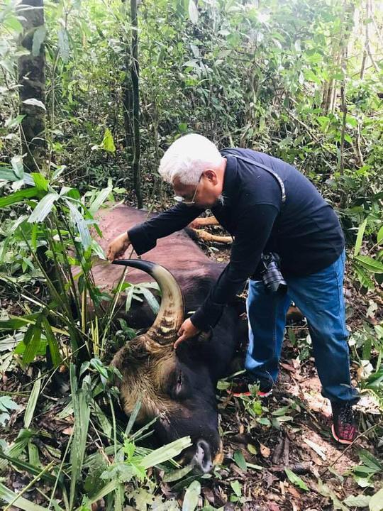 Con bò tót được phát hiện chết trong rừng sâu.