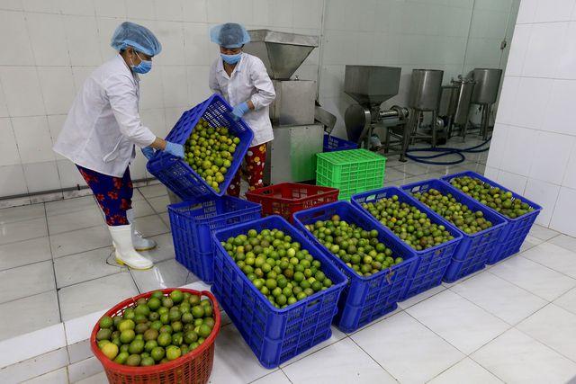 Ngoài bán chanh tươi, ông Hiển còn có xưởng chế biến chanh thành phẩm như làm nước cốt, tinh dầu, bột chanh, vỏ sấy.