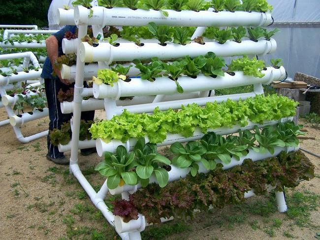 Bạn cũng có thể sử dụng các ống dẫn nước lớn, khoét thủng và đổ đất trồng rau vào bên trong. Với cách làm này những loại cây gia vị như xà lách, rau mùi,... sẽ phát triển rất tốt.