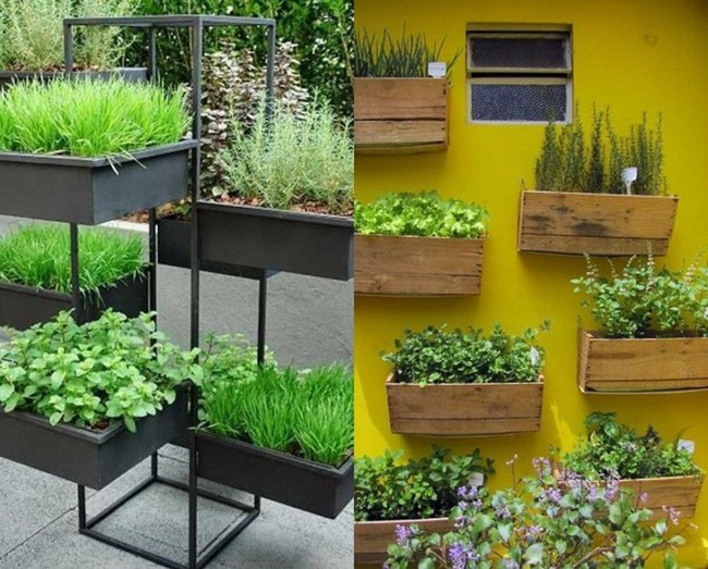 Hộp gỗ/nhựa đều có thể tận dụng để trồng rau.