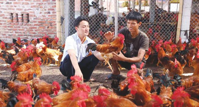 Người dân huyện Yên Thế (Bắc Giang) tăng quy mô đàn gia cầm.