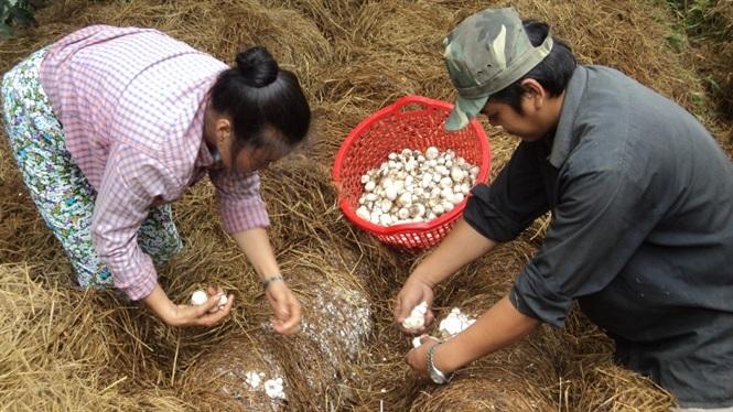 Năm 2019 Trung tâm Khuyến nông Vĩnh Long tiếp tục hỗ trợ cho đồng bào dân tộc xã khó khăn ở ấp Ngãi Lộ B, thôn Rôn, xã Trà Côn của huyện Trà Ôn.