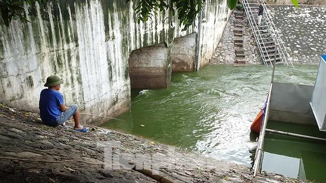 Ở miệng cống nước đầu vào (đoạn gần đường Hoàng Quốc Việt) nước trong xanh.