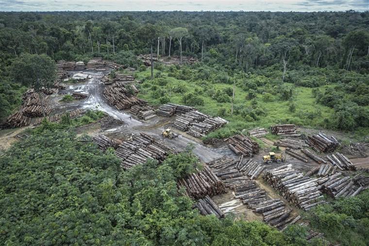 Tình trạng chặt phá rừng tại Brazil hiện đang ở tốc độ lớn chưa từng thấy (Ảnh: Reuters)