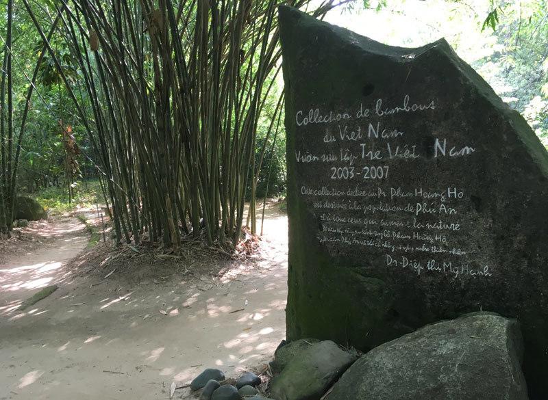Vườn sưu tập tre Việt Nam.