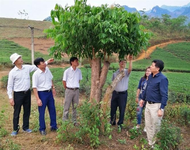 TS Lê Quốc Thanh, Phó Giám đốc Viện Khoa học Nông nghiệp Việt Nam (nay là GĐ Trung tâm KNQG) cùng lãnh đạo Trung tâm KN Yên Bái kiểm tra mô hình ghép cải tạo nhãn (cây ghép năm 2018).