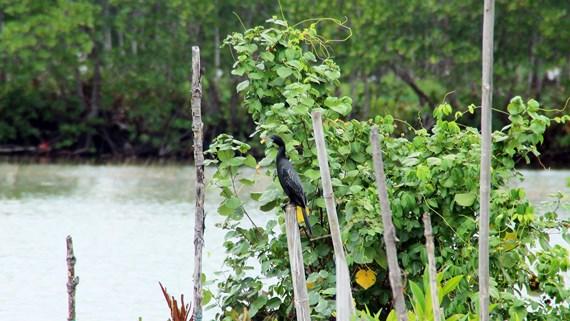 Cồng cộc là loài chim có giá trị về khoa học và du lịch.