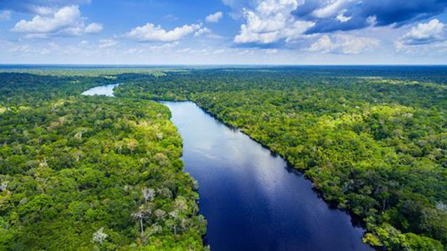 Sông Amazon ở Brazil. Ảnh: E+.