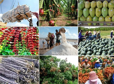 """Giá nông sản tiếp tục giảm sâu, xuất khẩu nông, lâm, thủy sản ngay lập tức """"lao dốc"""" - Ảnh 2."""