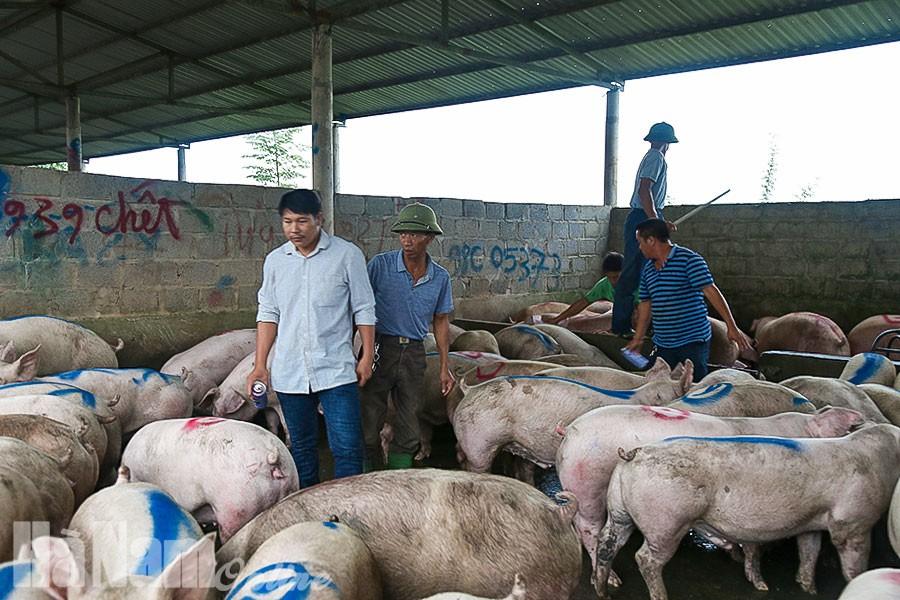 """Giá heo hơi hôm nay 29/9: Chợ đầu mối """"cháy"""" lợn, miền Nam khởi sắc - Ảnh 3."""