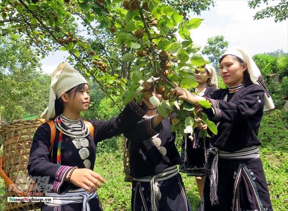 Lê Hồng Thái sản phẩm mang đặc điểm riêng của vùng miền ở xứ Tuyên.