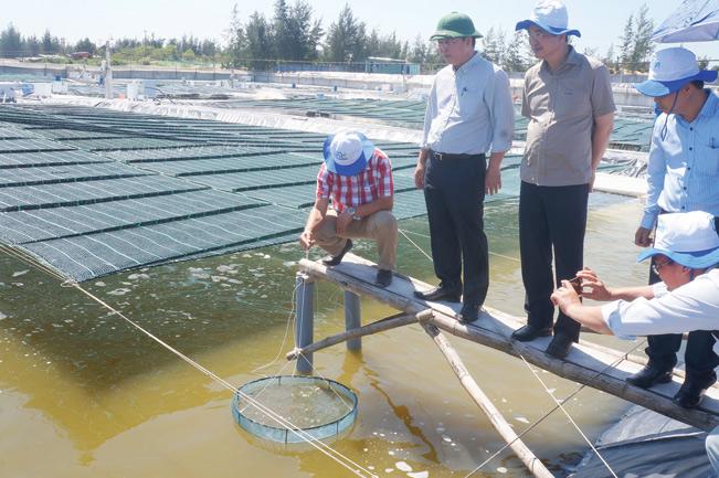 Ông Lê Trí Thanh – Phó Chủ tịch UBND tỉnh Quảng Nam thăm mô hình nuôi tôm công nghệ cao trên cát tại xã Bình Hải, huyện Thăng Bình.
