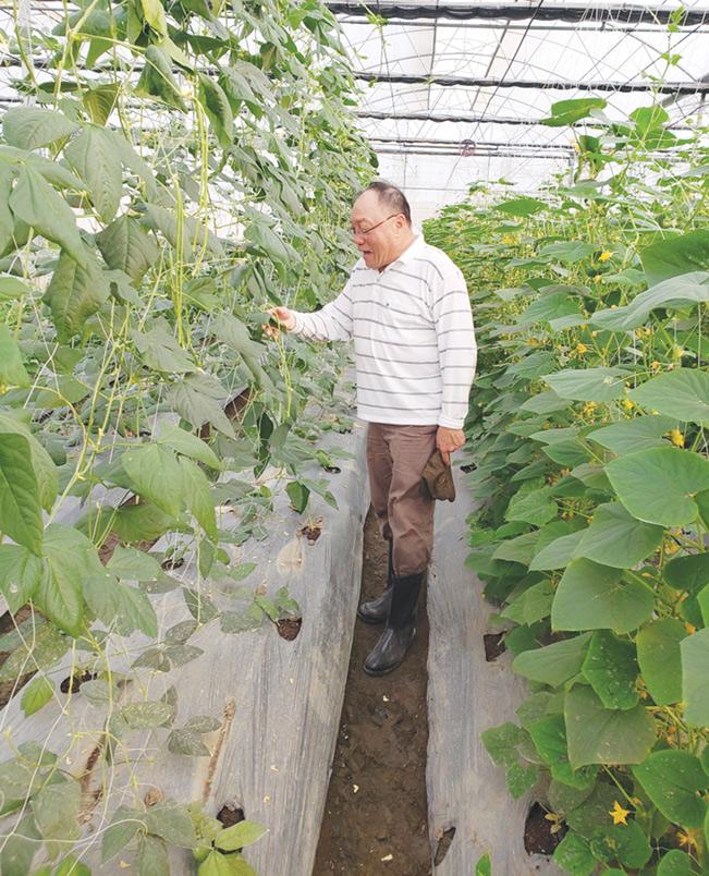 Tiến sỹ nông nghiệp Nguyễn Bá Hùng kiểm tra sự sinh trưởng của cây trồng.