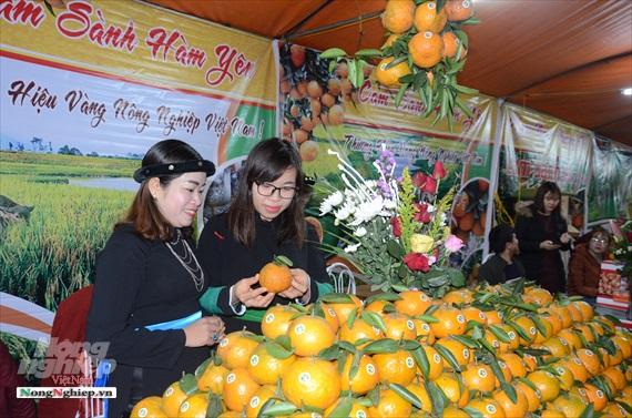 Cam sành Hàm Yên được công nhận là 1 trong 50 trái cây đặc sản Việt Nam.