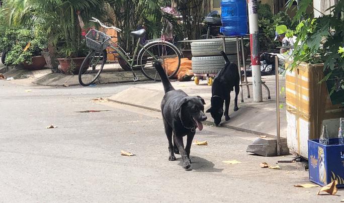 Chó thả rông, không rọ mõm thản nhiên đi lại trong chung cư Huỳnh Văn Chính II.