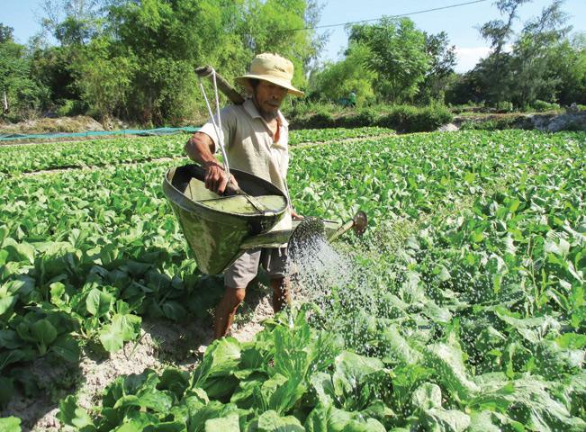 Vùng rau an toàn tại thôn Đại Bình - xã Quế Trung. Đoàn Hồng