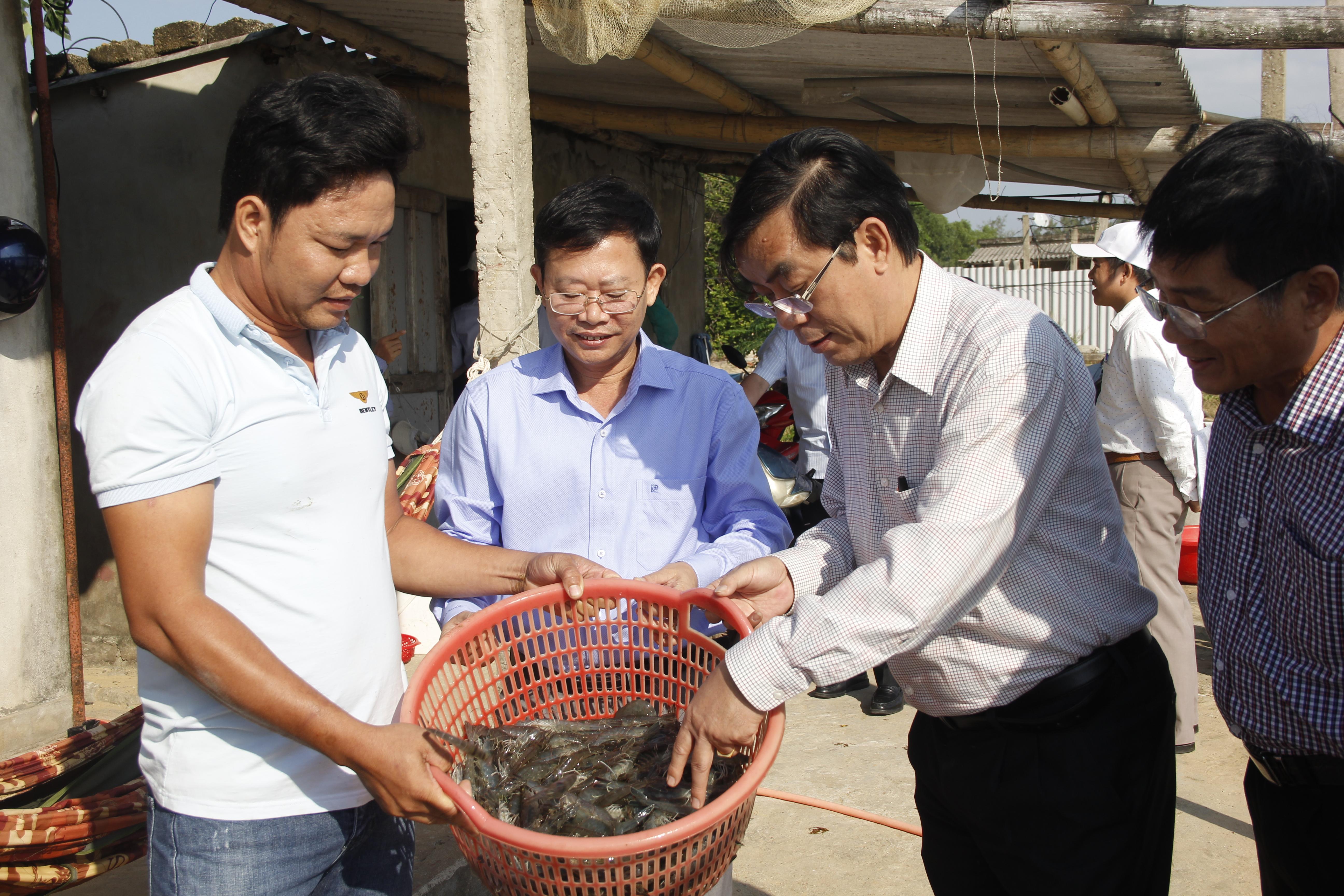 Ông Nguyễn Đức Chính, Chủ tịch UBND tỉnh Quảng Trị đến thăm, động viên nông dân nuôi tôm hai gia đoạn đạt hiệu quả cao ở xã Trung Giang, huyện Gio Linh.