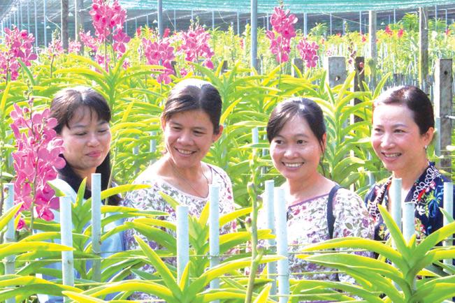Doanh thu bình quân trên 1ha đất nông nghiệp tại Củ Chi đạt 500 triệu đồng/ha/năm. Riêng mô hình trồng lan cho doanh thu bình quân 700 triệu đồng/ha/năm...