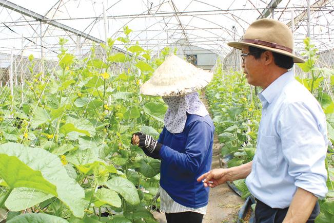 Nhờ áp dụng công nghệ cao ông Huỳnh Đoàn Thông có thể nâng hiệu quả sản xuất hạt giống lên 30%, có điều kiện để tuyển lựa nguồn gene tốt sản xuất ra nguồn giống sạch bệnh.