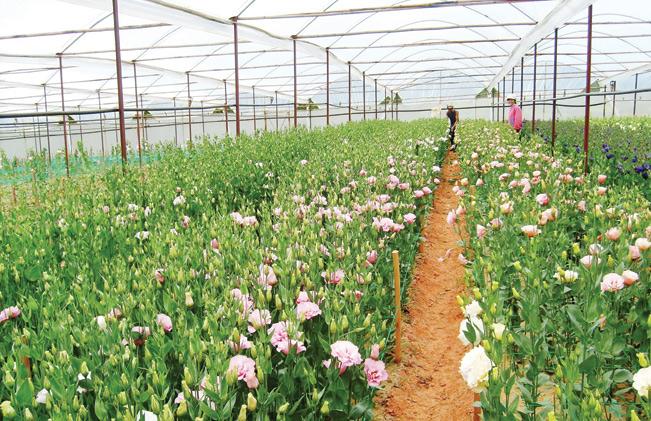 Nguồn vốn Quỹ HTND giúp nông dân Lâm Đồng đầu tư phát triển nông nghiệp công nghệ cao.