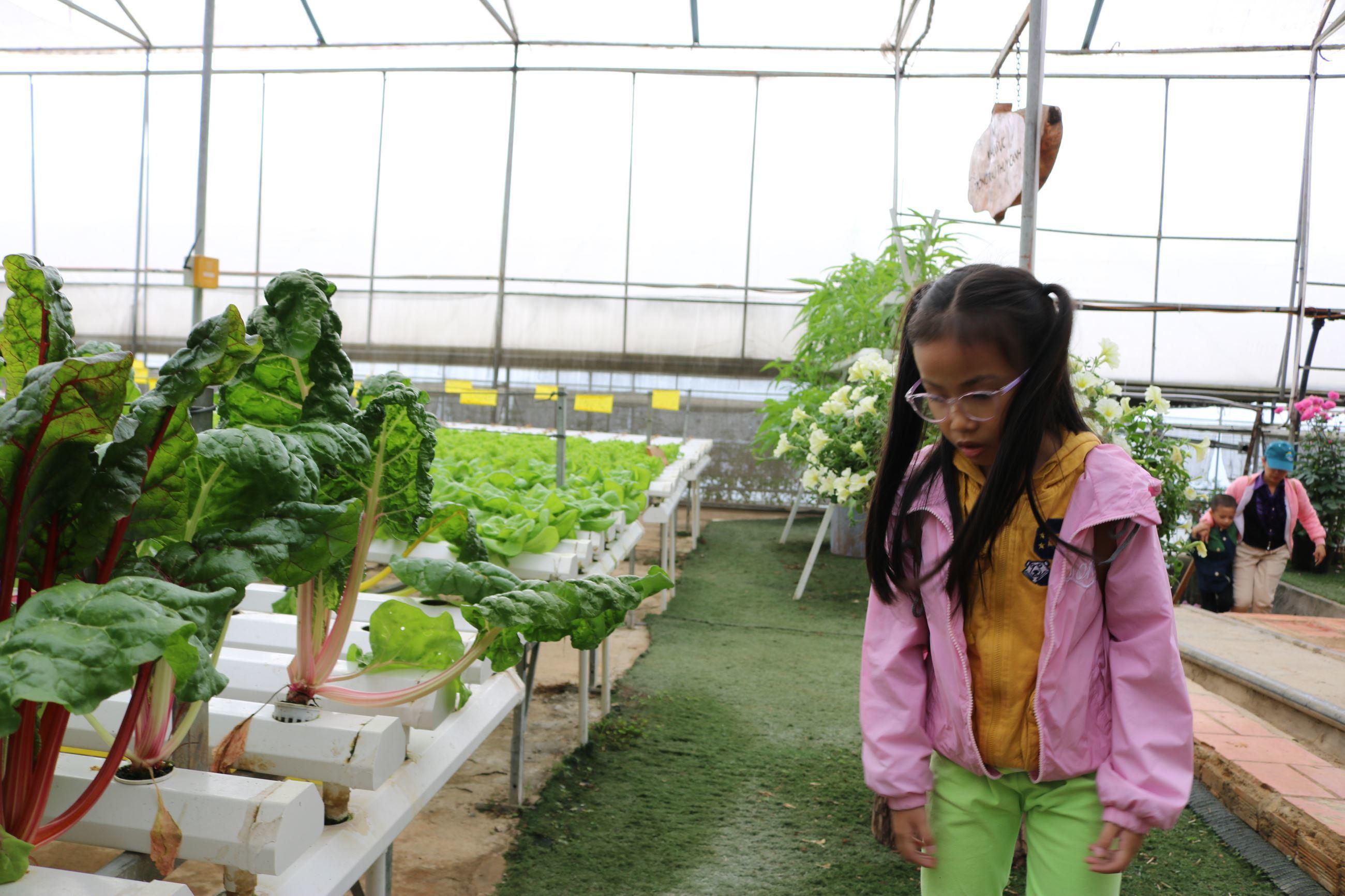 Những trẻ em trong một gia đình đến tìm hiểu và khám phá các nguồn rau cải, củ quả sạch tại Green Box, Tp. Đà Lạt, Ảnh: Khang Nguyễn | Vietkings.