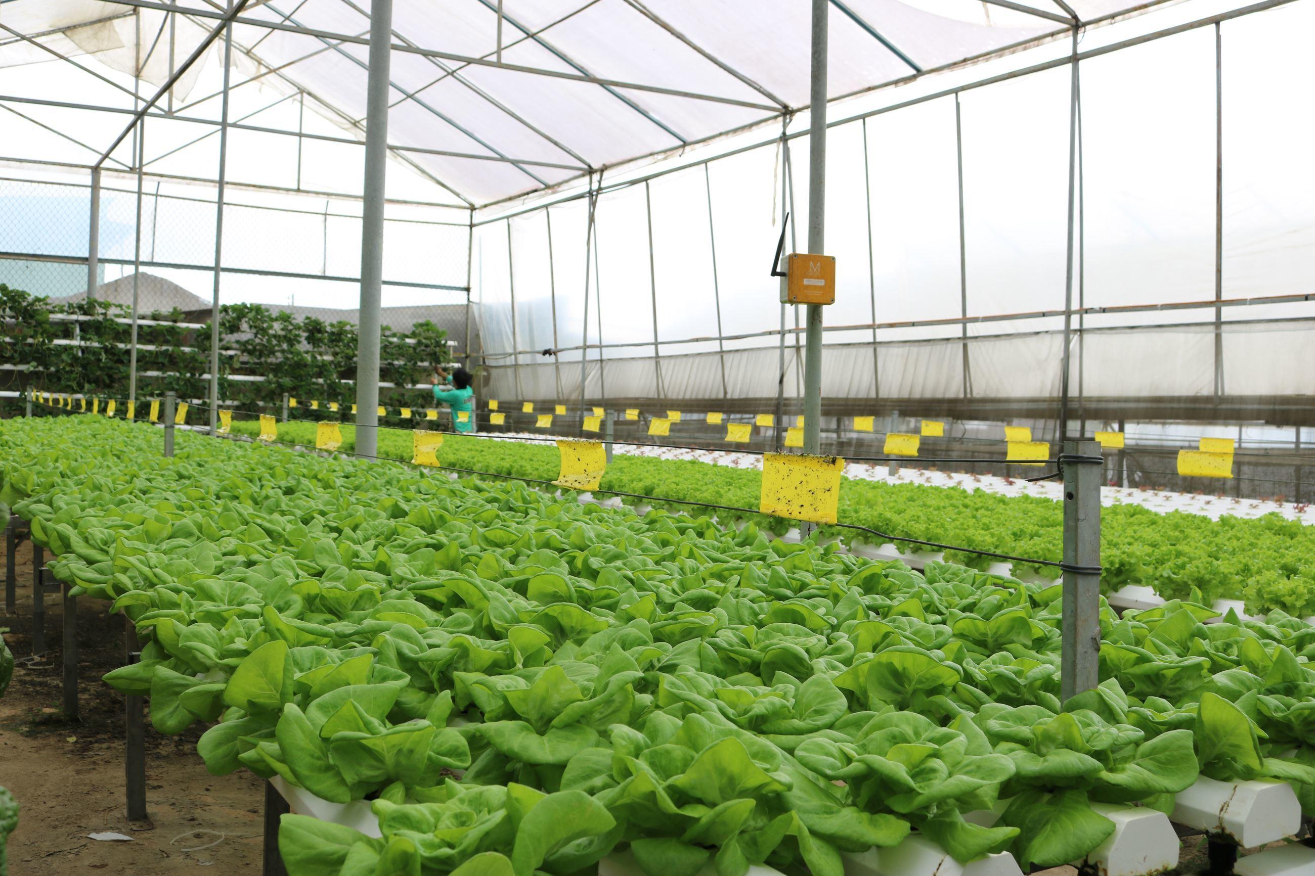 Một góc trong không gian của Green Box, Tp. Đà Lạt. Ảnh: Khang Nguyễn | Vietkings