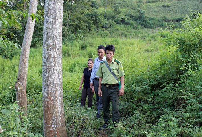 Để bảo vệ rừng tốt, lực lượng kiểm lâm huyện thường xuyên phối hợp với các chủ rừng, tuần tra bảo vệ rừng