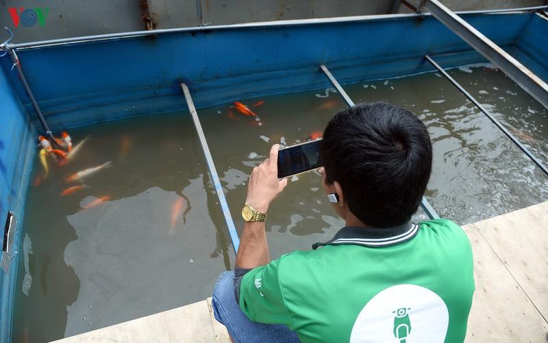 Nhiều người dân thích thú sau khi cá Koi bơi lội khỏe mạnh sau hơn 1 ngày được thả.