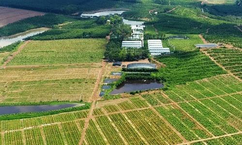 Hình ảnh quảng bá để bán sản phẩm farmstay xuất hiện trên các chợ trực tuyến.